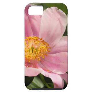 Pink Peony Flower Fully Open iPhone 5 Cover