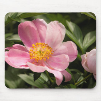 Pink Peony Flower Fully Open Mouse Pad
