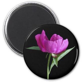 pink-peony magnet