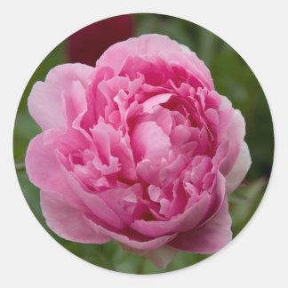 Pink Peony | Rosa Pfingstrose Round Sticker