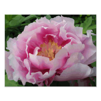 Pink Peony Watercolor Fine Floral Poster