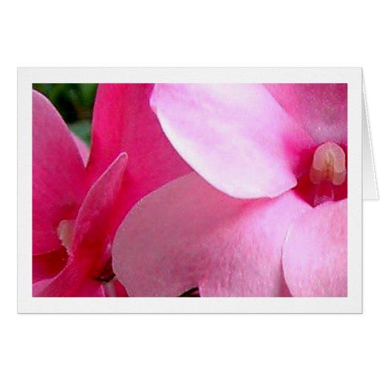 Pink Petals Card