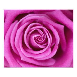 Pink Petals Photo Print
