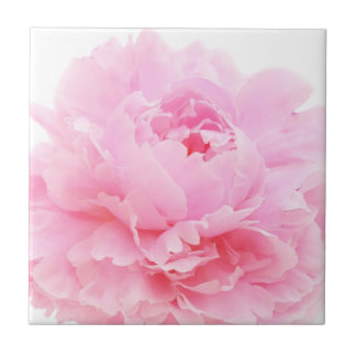 pink petals tile