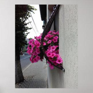 Pink Petunia Blossom Poster
