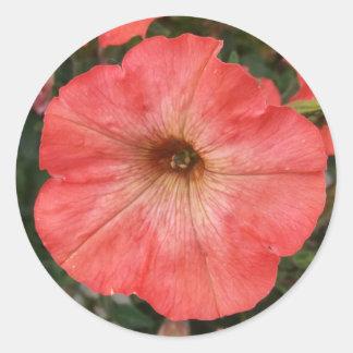Pink Petunia Classic Round Sticker