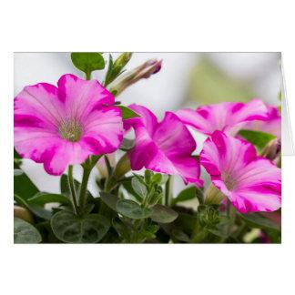 Pink Petunia Passion Card