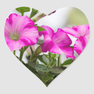 Pink Petunia Passion Heart Sticker