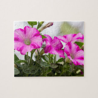Pink Petunia Passion Jigsaw Puzzle
