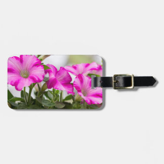 Pink Petunia Passion Luggage Tag