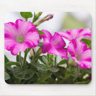 Pink Petunia Passion Mouse Pad