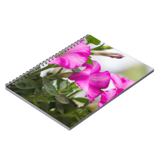 Pink Petunia Passion Notebook
