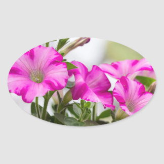 Pink Petunia Passion Oval Sticker