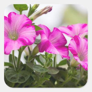 Pink Petunia Passion Square Sticker