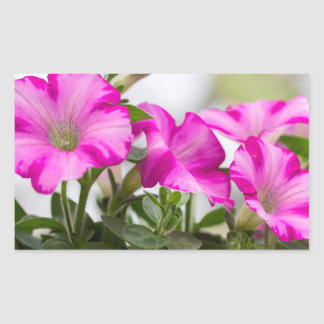 Pink Petunia Passion Sticker