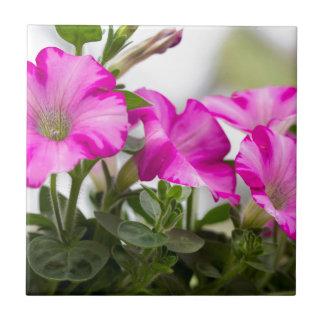 Pink Petunia Passion Tile