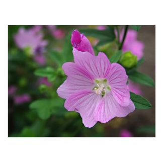 Pink Petunia Postcard