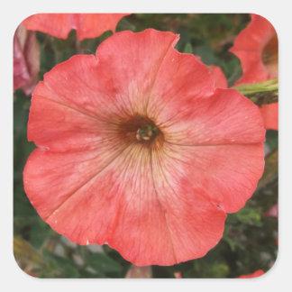 Pink Petunia Square Sticker