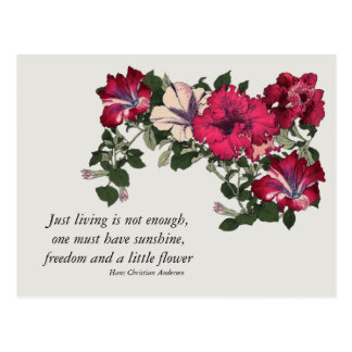 Pink Petunias with Hans C Andersen quote Postcard