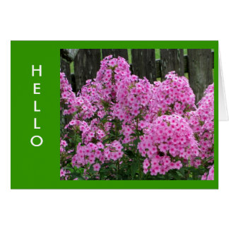 Pink Phlox and Fence Card