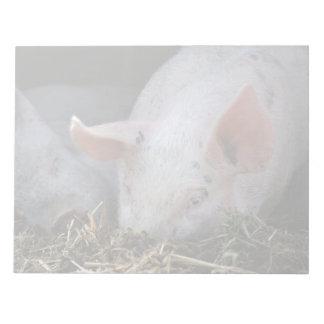 Pink pig photo notepads