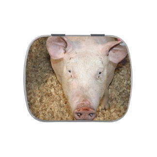 Pink pig with ear tag cute piggie picture