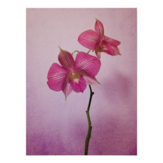 Pink Pink Orchid Blossoms Poster Print
