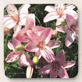 Pink, Pink White Asiatic Lilies Coaster