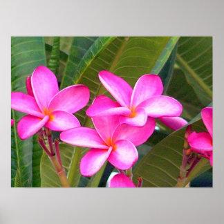 Pink Plumeria Flower Print