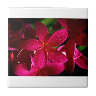 Pink Plumeria Flowers Tile