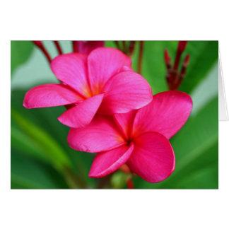 Pink Plumeria Frangipani Hawaiian Flower Card