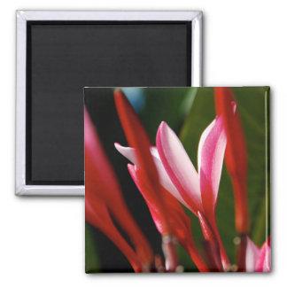 Pink Plumeria Magnet