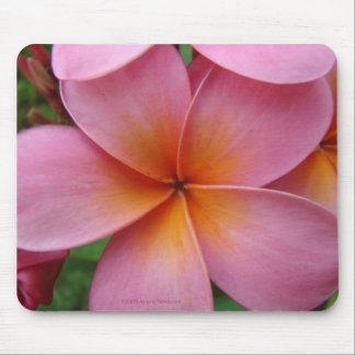 Pink Plumeria Mousepad