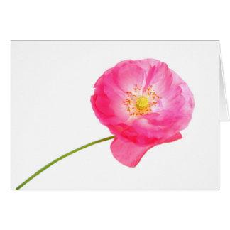 pink poppy card