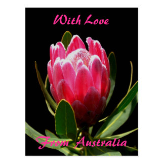 Pink Protea, With Love, From  Australia Postcard