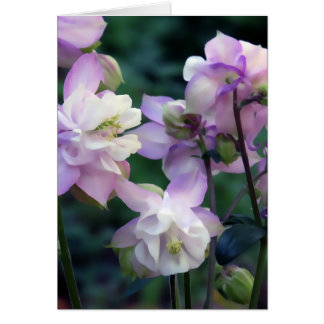 Pink Purple Columbine flowers Card