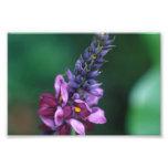 Pink Purple Flower on Flowering Kudzu Art Photo