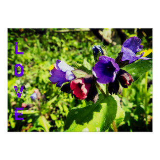 Pink&Purple Flowers Poster