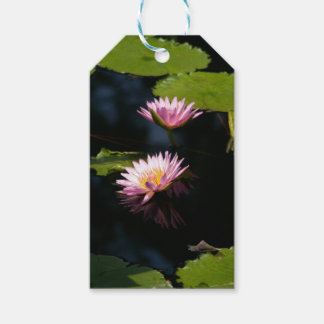 Pink Purple Lotus Waterlilies Gift Tags