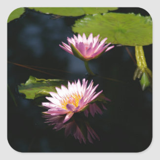 Pink Purple Lotus Waterlilies Square Sticker