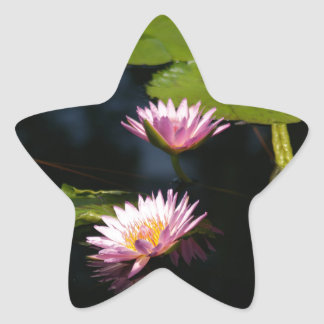 Pink Purple Lotus Waterlilies Star Sticker