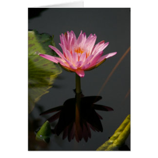 Pink Purple Lotus Waterlily Card