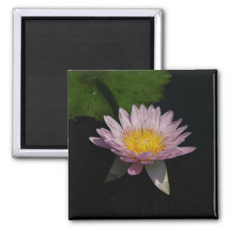 Pink Purple Lotus Waterlily magnet
