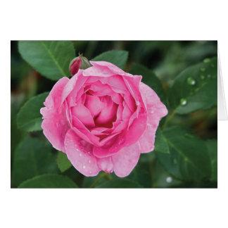 Pink Raindrops Card
