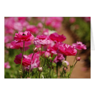 Pink Ranunculas Design by Laurel Card