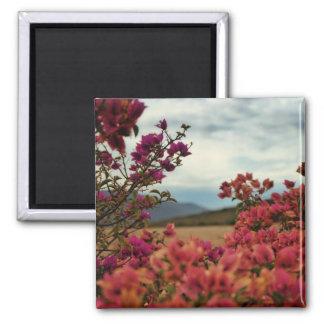 Pink Red Bougainvillea Flowers Landscape Magnet