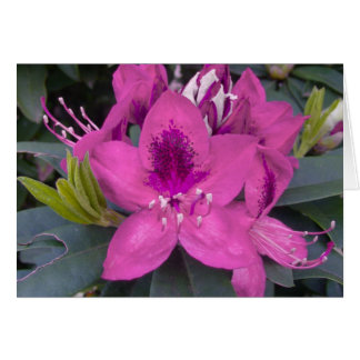 Pink Rhododendron Card