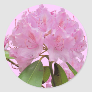 Pink Rhododendron Flowers Classic Round Sticker