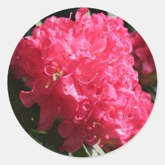 Pink Rhododendron Round Sticker