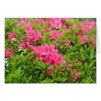 Pink rhododendron spring flower card